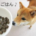 柴犬コマリ ドッグフード アカナ