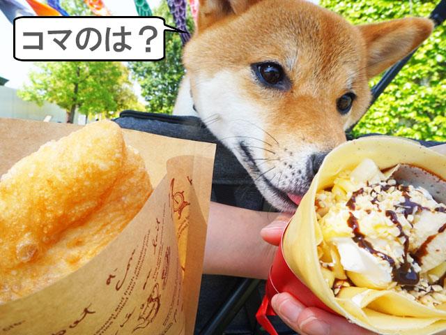 柴犬コマリ ノリタケの森 こどもの日
