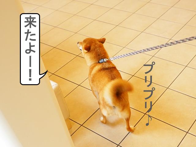 柴犬 シャンプー 動物病院