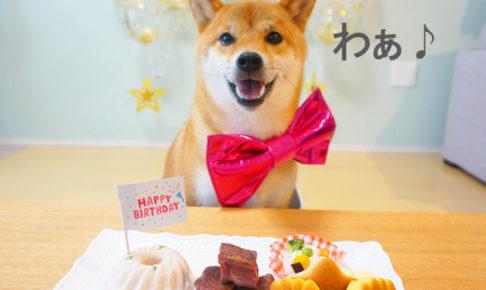 柴犬コマリ 誕生日 ごはん