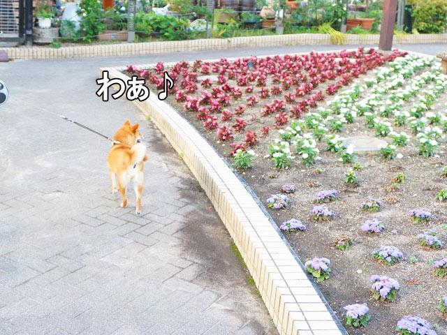 柴犬 名城公園 フラワープラザ