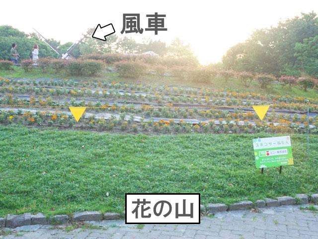 名城公園 花の山