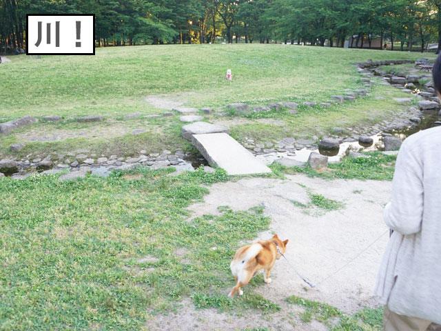 柴犬コマリ 名城公園