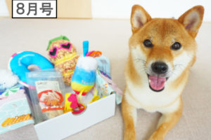 柴犬コマリ pecobox ペコボックス