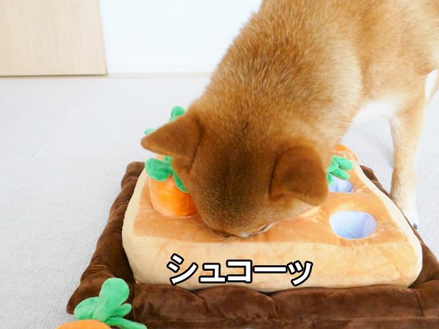 にんじん畑 柴犬コマリ